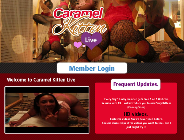 Caramel Kitten Live Special Price